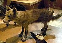 改ニホンオオカミ1250px-Honshu-wolf