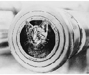 ネコ22800px-A_cat_on_HMAS_Encounter