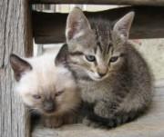 猫追跡2bis-3_21083065